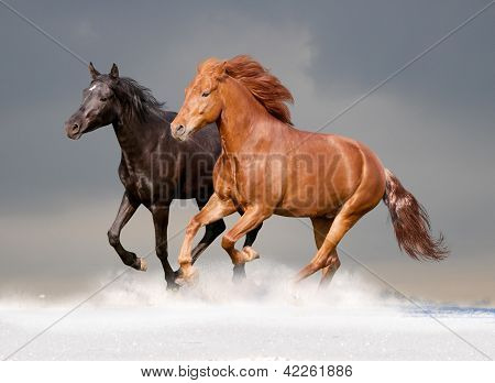 two horses in the snow with sky behaind