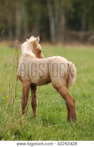 cute beautiful pony filly in a green meadow with blue sky background