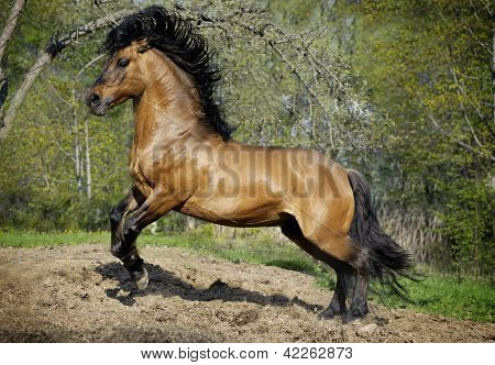 Beautiful Roan Stallion Playing In Paddock