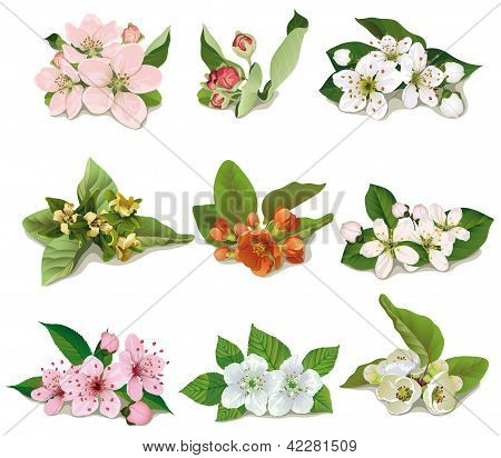 Set Of Flowers On Fruit Trees