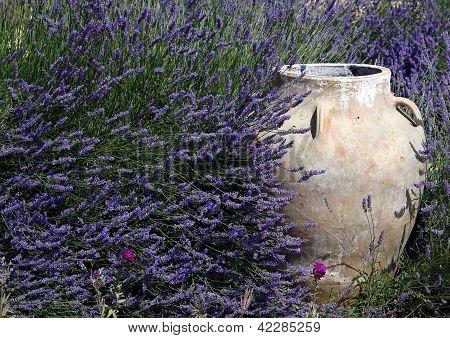 Jar & Lavender