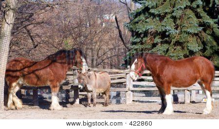 Horses And Donkey