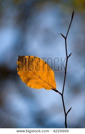 Leaf Left Alone