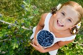 stock photo of eat grass  - Blueberries - JPG