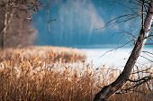 picture of dry grass  - Beautiful scene of late fall with lonely bare birch and dry grass in foreground - JPG