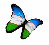 Uzbek Flag Butterfly Flying, Isolated On White Background