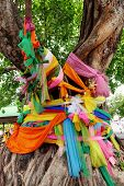 picture of nouns  - Big Bodhi Tree wrapped around with colors cloth - JPG
