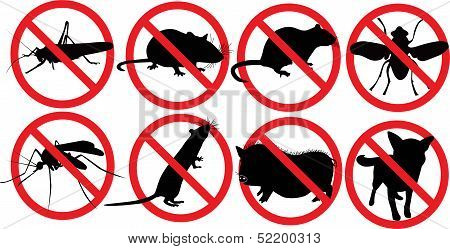Animal dogs pig rat insects