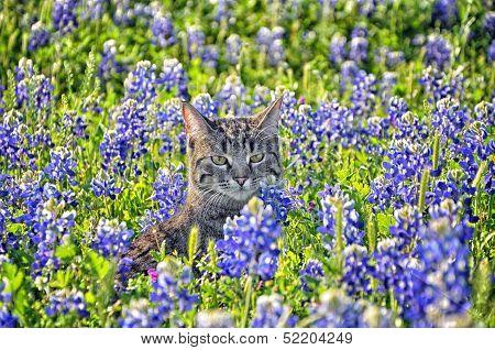 Cat in Bluebonnets