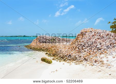 Mountains of shells