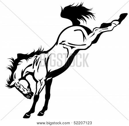 Bucking Horse Black White