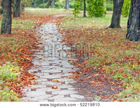 Paved Alley-fall