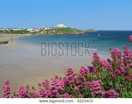 Great Western Beach And Red Valerian (centranthus Ruber) In Newq
