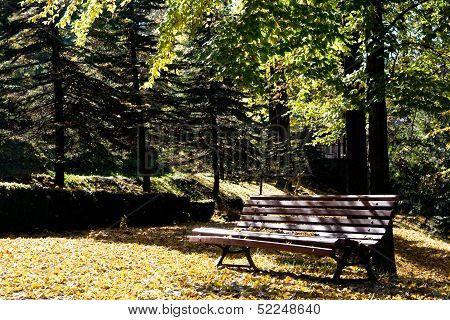 Bench stands in a sunny spring park