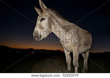 Bienvenido Donkey Portrait