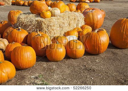 Fresh Orange Pumpkins and Hay in a Rustic Outdoor Fall Setting.
