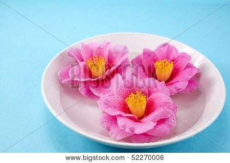 Camellia flowers in the dish