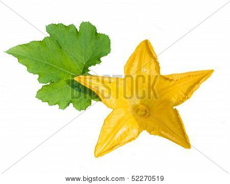 Marrow / Zucchini Flower Isolated On White