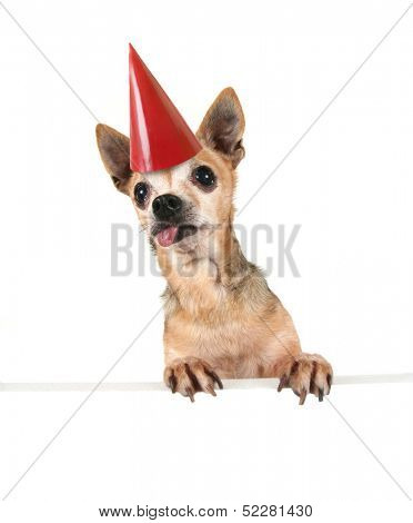 a goofy chihuahua holding a sign and a party hat on