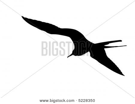 Isolated Frigate-bird Silhouette