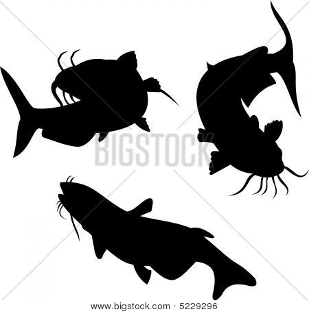 Catfish Silhouettes