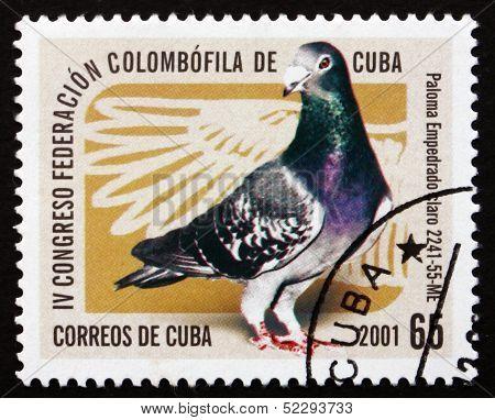 Postage Stamp Cuba 1997 Pigeon, Empedrado Claro