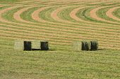 image of alfalfa  - Alfalfa hay bales in field with yellow and green curves - JPG