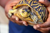pic of terrapin turtle  - shot of a Little Boy Holding A Turtle
