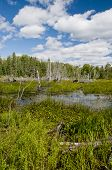 foto of boggy  - A typical northern ontario scene  - JPG