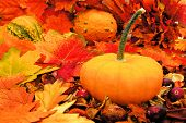 stock photo of gourds  - Autumn pumpkin among colorful fall leaves and gourds - JPG