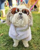 stock photo of mutts  - a cute dog at a local park - JPG