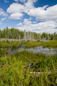 stock photo of boggy  - A typical northern ontario scene  - JPG
