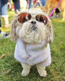 picture of spayed  - a cute dog at a local park - JPG