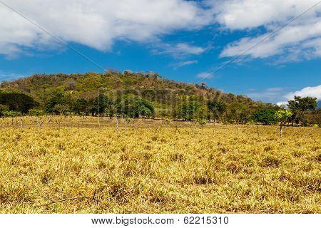 Nicaraguan Field
