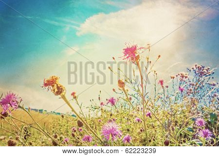 beautiful view in summer flower (Forest of Flowers )