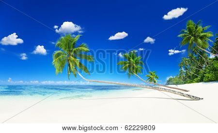 Beach with White Sand and Coconut Palm Trees