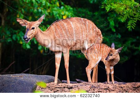 Mother's love deer and cute fawn