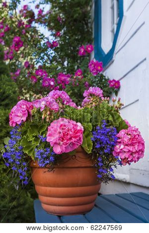 A terracotta garden planter filled with geraniums and lobelia.
