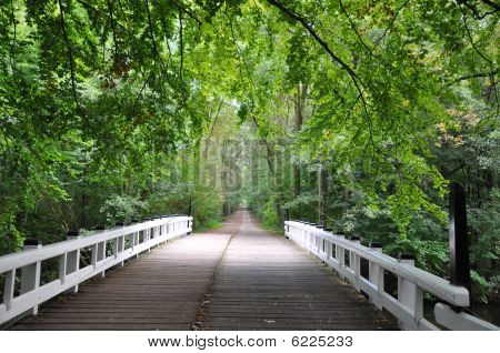 Bridge in forrest
