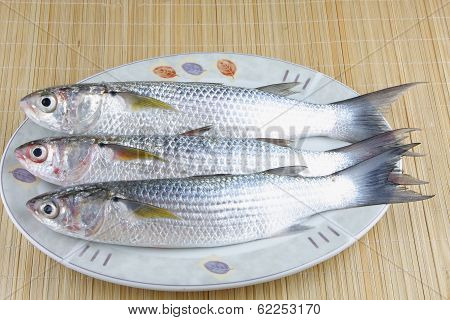 Fresh Mullet fish on palte