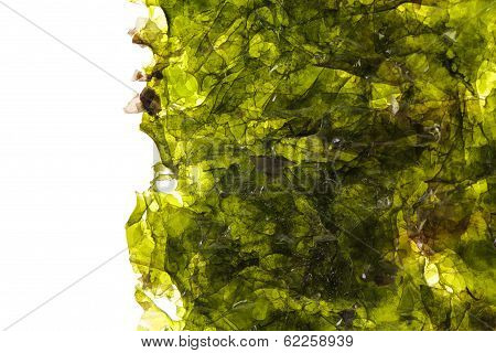 Seaweed 2/3