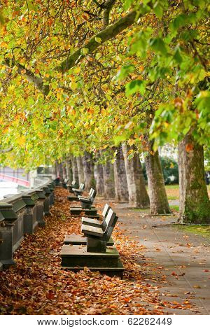 Benches on the Thames bank in Victoria Tower Gardens park in London.
