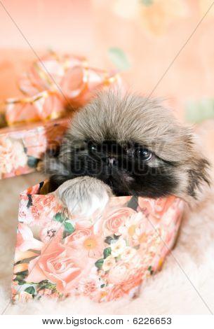 Puppy In Box