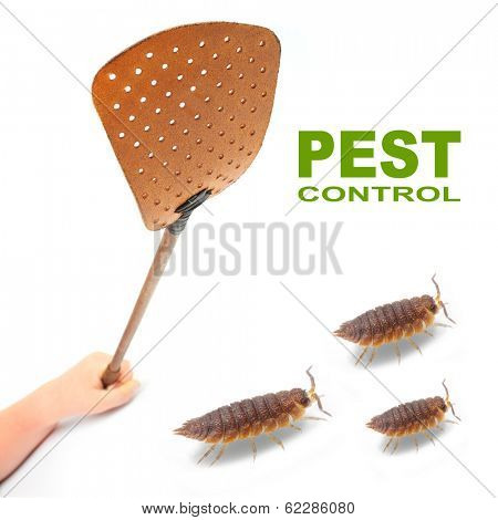 Flyswatter and The Pill-bugs (Armadillidium vulgare). Ecological pest control.