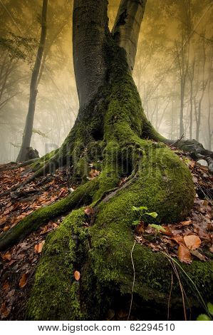 Tree with big roots in enchanted forest in autumn