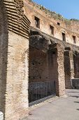 Detail Of The Colosseum Ruins