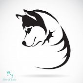 image of husky  - Vector image of a dog siberian husky on white background - JPG
