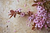 Spring Blossoms on a Stone Background
