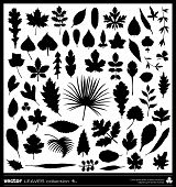 stock photo of willow  - Leaf vector silhouettes collection - JPG