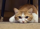 image of animal cruelty  - Portrait of yellow sad sick cat lying at home - JPG
